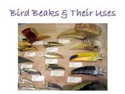 Bird Beaks and the Food they Eat