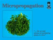 Micropropagation