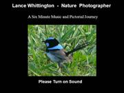 Lance Whittington Nature Photographer
