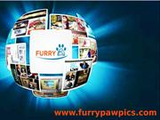 Furry Paw Pics-Celebrity Pet Portraits, Custom Pet Art