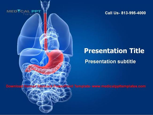 Download human stomach powerpoint template authorstream toneelgroepblik Image collections
