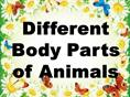 Different+Body+Parts+of+Animals+(1)