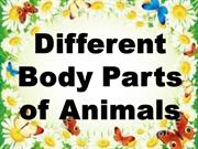 Different Body Parts of Animals