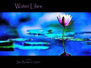 1-FLO-22-WATER LILIES-The Best of Water Lily-Sad Romance-violin