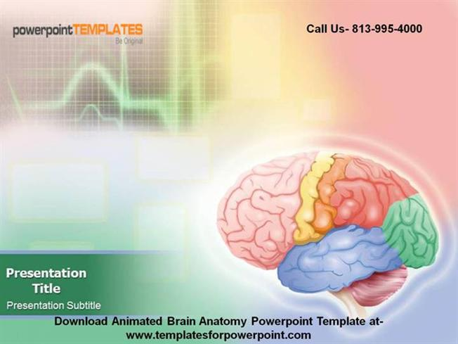 Animated Brain Anatomy Powerpoint Template |authorSTREAM