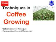 2 Coffee Growing Techniques - Nursery Establishment