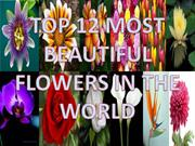 TOP 12 BEAUTIFUL  FLOWERS