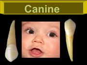 5-canines