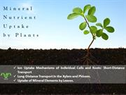 Mineral nutrient uptake by plants