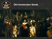 Old Amsterdam Seeds