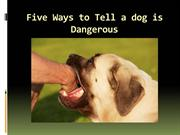 Five Ways to Tell a dog is Dangerous