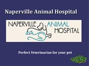 Naperville Animal Hospital - High-quality animal care services