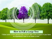 How to Fell a Large Tree