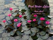 1-COLOR-12  Water Lilies-Pink-Amor Amor-Giovanni  marradi-Piano