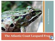 atlantic leopard frog