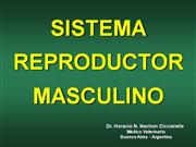 SISTEMA REPRODUCTOR MASCULINO