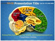 Download Brain Anatomy Powerpoint Template