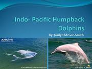Indo- Pacific Humpback Dolphins