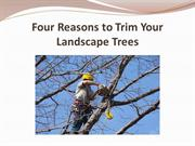 Four Reasons to Trim Your Landscape Trees