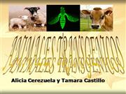 ANIMALES TRANSGNICOS
