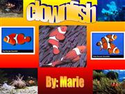 Calissa Percul Clownfish