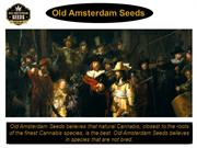 Old Amsterdam Seeds - New Cannabis Seeds