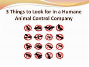 3 Things to Look for in a Humane Animal Control Company