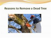 Reasons to Remove a Dead Tree