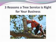3 Reasons a Tree Service is Right for Your Business