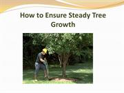 How to Ensure Steady Tree Growth