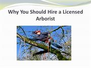 Why You Should Hire a Licensed Arborist