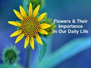 Flowers & Their Importance In Our Daily Life