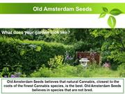 Bio Tabs in 10 pieces, 25 pieces, 50 pieces - Old Amstedam Seed