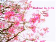 Nature in Pink - Piano