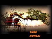 Tree Bonsai MUNG XUAN