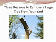 Three Reasons to Remove a Large Tree From Your Yard