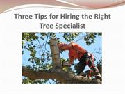 Three Tips for Hiring the Right Tree Specialist