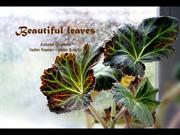 1-JAN-21-Beautiful Leaves-Autumn Overture-Vadim  Kiselev-piano&violin