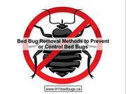 Bed Bug Removal Methods to Prevent or Control Bed Bugs