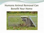 Humane Animal Removal Can Benefit Your Home