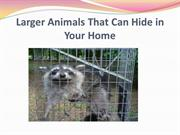 Larger Animals That Can Hide in Your Home
