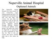 Naperville Animal Hospital  Orphaned Animals