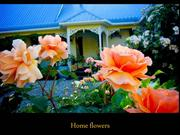 Home flowers-View from Within-Adam Hurst cello