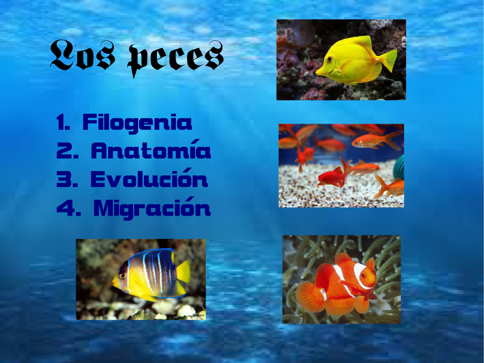 Los Peces |authorSTREAM