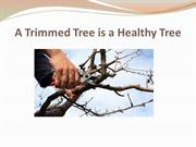 A Trimmed Tree is a Healthy Tree