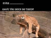 Have  You  Ever  Been  So  Tired?