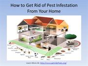 How to Get Rid of Pest Infestation From Home