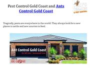 Pest Control Gold Coast and Ants Control Gold Coast