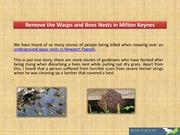 Remove the Wasps and Bees Nests in  Milton Keynes