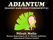 ADIANTUM (Maiden hair fern)